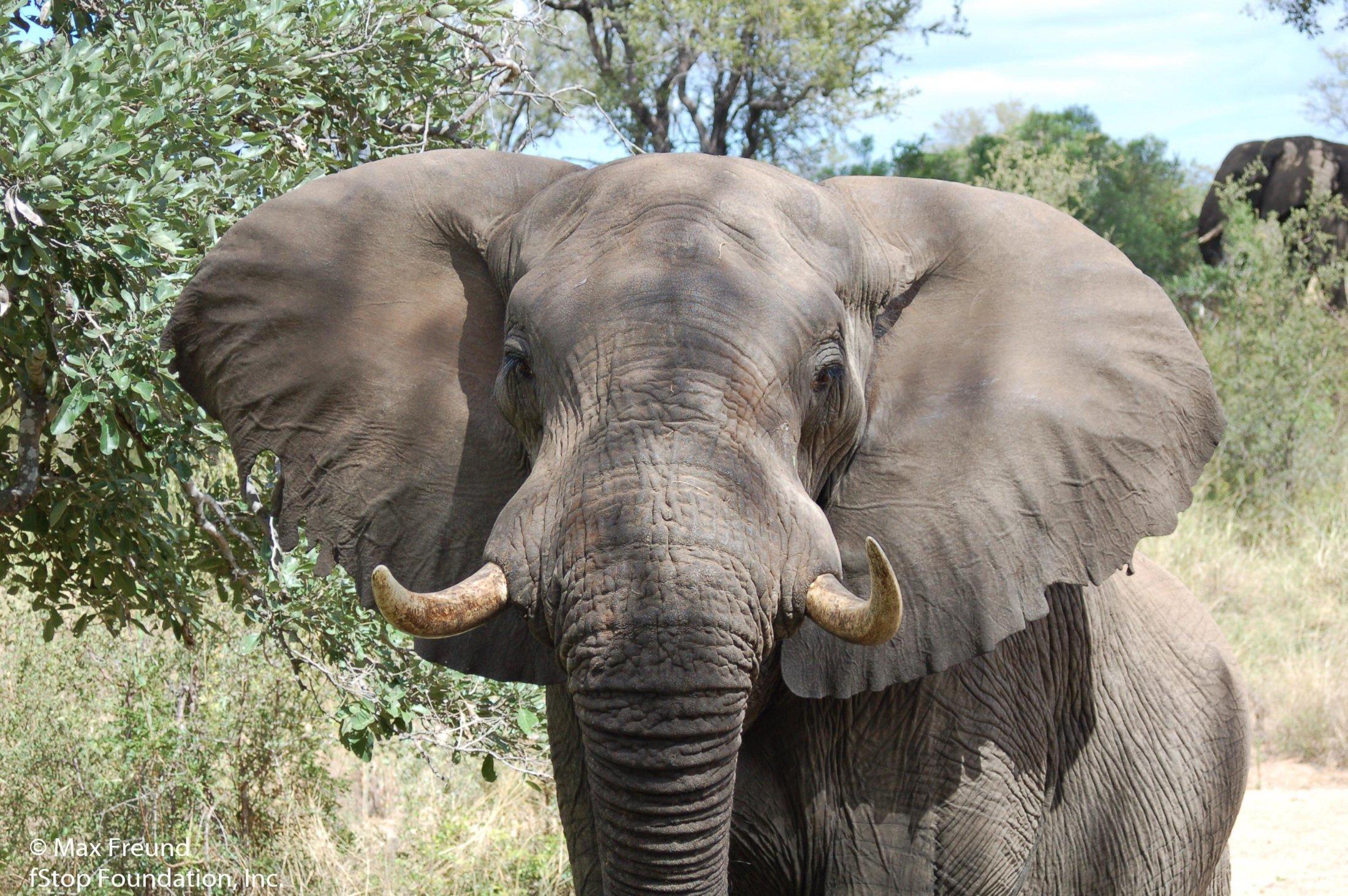 Elephant1-2