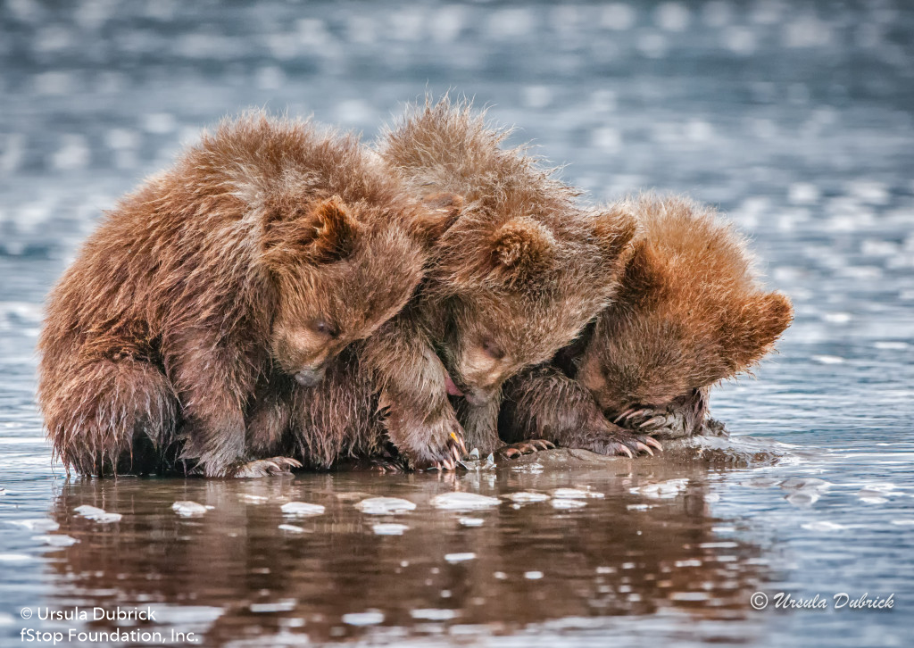 URSULA THREE BEAR CUBS