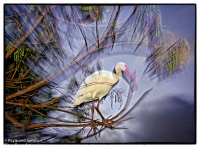 02A NOV 28-WAKODAHATCHEE-IBIS-SUNSET-2013 162