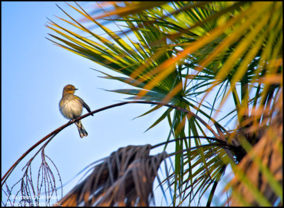 03 MARCH 10-GREEN CAY-WAKODAHATCHEE-LITTLE BIRD-2014 028