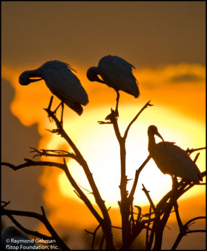 065 AUGUST 6-WAKODAHATCHEE-SUNSET-IBIS-2013 278