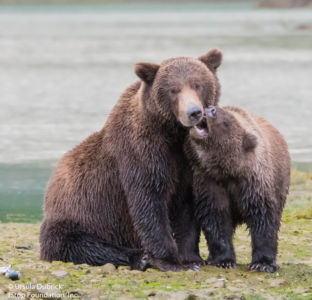 Bears 1