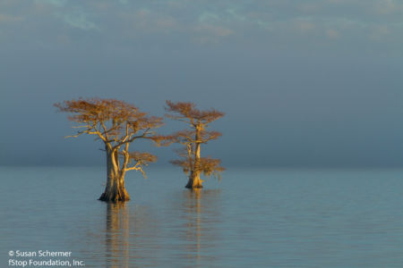 Blue Cypress Lake-