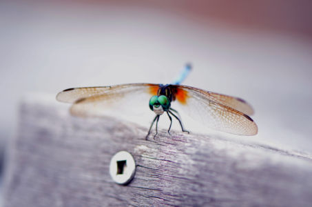 Dragon Fly 2