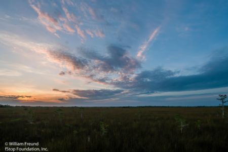 EVERGLADES SUNRISE 4-16 - Copy